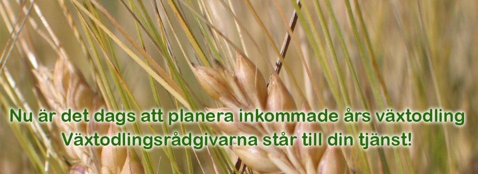 Odlingsplan_slider